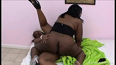 Huge-ass ebony queens Kelly Reign and Hershey Rae scissoring in bed