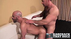 Bald bears with great big dicks make each other moan late at night