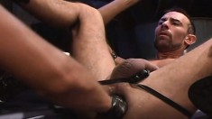 Hung stallion gives in to temptation and has his butt fisted